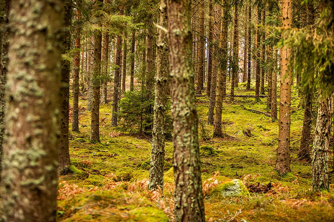 Fjällräven Hunting, Sörmland